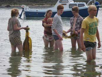 Sea foraging for kelp